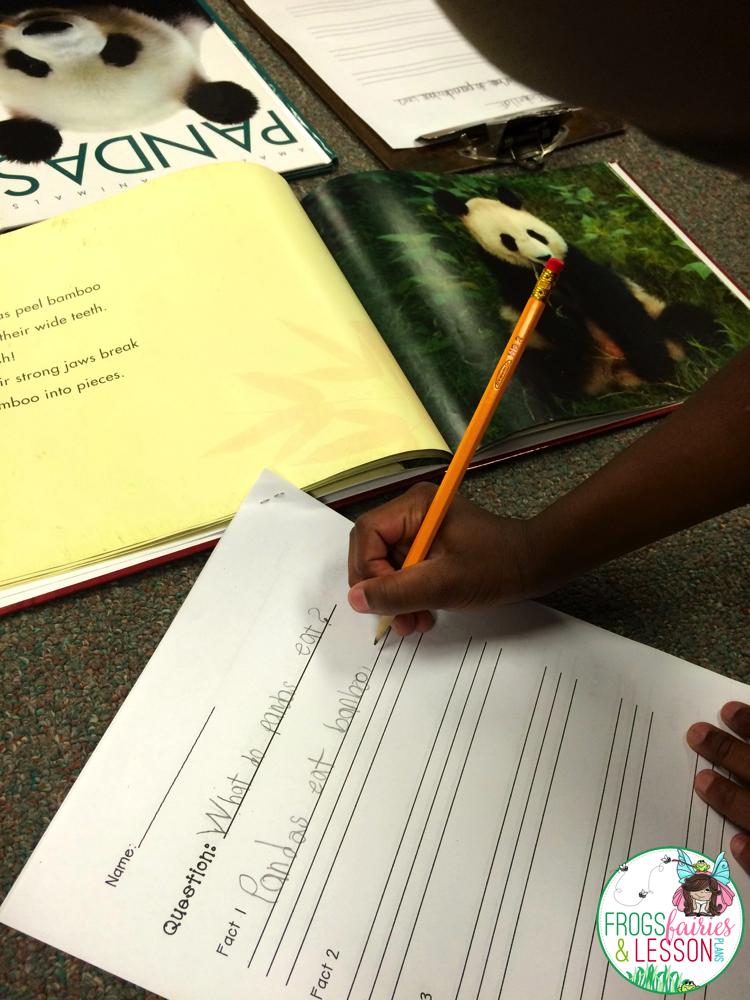 Writing an Animal Book